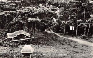 Ansichtkaart Terschelling Wandel- en rijwielpaden door de dennebossen 1965 HC24173