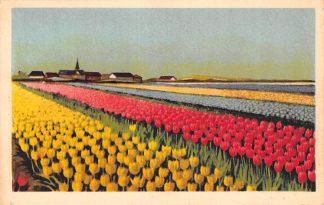 Ansichtkaart Lisse Hillegom Sassenheim Hollandse Bloembollenvelden HC24482