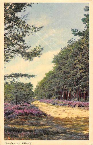 Ansichtkaart Elburg Groeten uit 1951 Bosweg HC24808