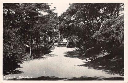 Ansichtkaart Appelscha Belvedère 1949 HC25165