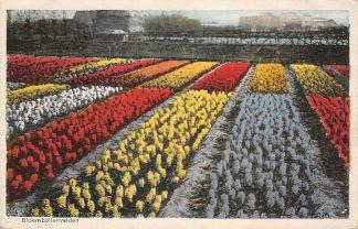 Ansichtkaart Lisse Hillegom Sassenheim Bloembollenvelden 1935 HC25192