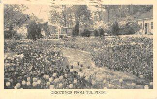 Ansichtkaart USA Zandbergen Bros Inc. Tulipdom Mill River Road, Oyster Bay N.Y. Bloembollenvelden Noord-Amerika HC25372