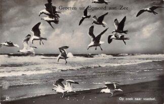 Ansichtkaart Egmond aan Zee Meeuwen op zoek naar voedsel 1934 HC25418