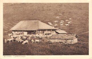 Ansichtkaart Zwitserland Suldthal Latreyenalp 1929 Kudde koeien Schweiz Suisse Switzerland Europa HC25714