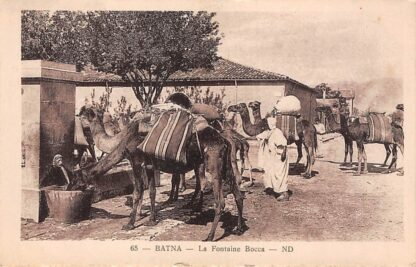 Ansichtkaart Algerije Alger Batna La Fontaine Bocca 1928 Dromedarissen Dieren Afrika HC25797