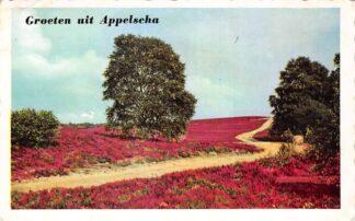 Ansichtkaart Appelscha Groeten uit 1959 Bloeiende heide HC25859