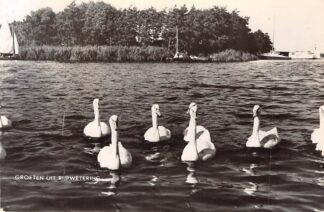 Ansichtkaart Rijpwetering Zwanen op het meer 1960 Kaag en Braassem HC26047