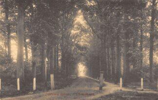 Ansichtkaart Ulvenhout Nieuwe dreef 1917 Breda Alphen - Chaam HC26560