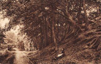 Ansichtkaart Bergen (NH) Hoogeduintje op den weg van Bergen naar Egmond 1928 HC26571