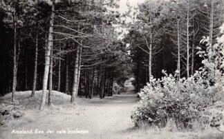 Ansichtkaart Ameland Een der vele boslanen 1961 HC26599