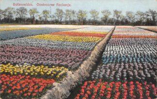 Ansichtkaart Oostvoorne Rockanje Bollenvelden 1932 Bloembollenvelden HC26946