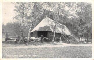 Ansichtkaart Loenen (GD) Schaapskooi Loenermark Veluwe 1956 HC27536