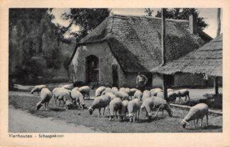 Ansichtkaart Vierhouten Schaapskooi 1950 Epe Veluwe HC27703