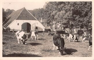 Ansichtkaart Arnhem Watermolen Park Sonsbeek met koeien in de wei 1951 Molen HC27860