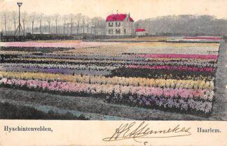 Ansichtkaart Haarlem Hyacinthvelden begin 1900 Bloembollenvelden HC27904