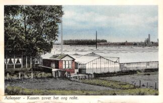Ansichtkaart Aalsmeer Kassen voor zover het oog reikt 1951 HC27907