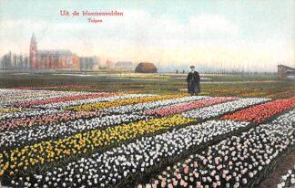 Ansichtkaart Hillegom Uit de bloemenvelden Bloembollenvelden HC28399