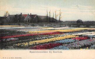 Ansichtkaart Haarlem Hyacintenvelden bij Haarlem Bloembollenvelden 1900 HC28675
