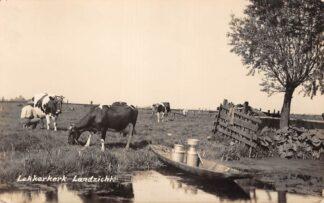 Ansichtkaart Lekkerkerk Landzicht met koeien in de wei en boot met melkbussen 1936 Type fotokaart HC28835