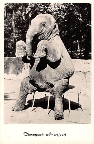 Ansichtkaart Amersfoort Een der gedresseerde olifanten van Dierenpark Amersfoort 1961 Zoo Dierentuin HC29036