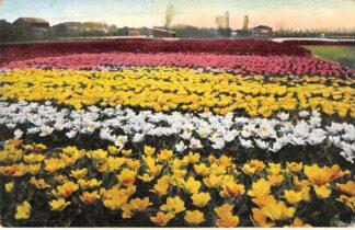 Ansichtkaart Lisse Hillegom Sassenheim Groet uit het Bollenland Bloembollenvelden 1916 HC29047