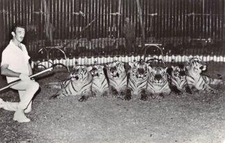 Ansichtkaart Circus Dressuurschool Uyterlinde met tijgers 1972 Wassenaar Rotterdam HC29696