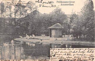 Ansichtkaart Amsterdam Artis Pelikanenvijver 1904 Zoo Dierentuin HC30042